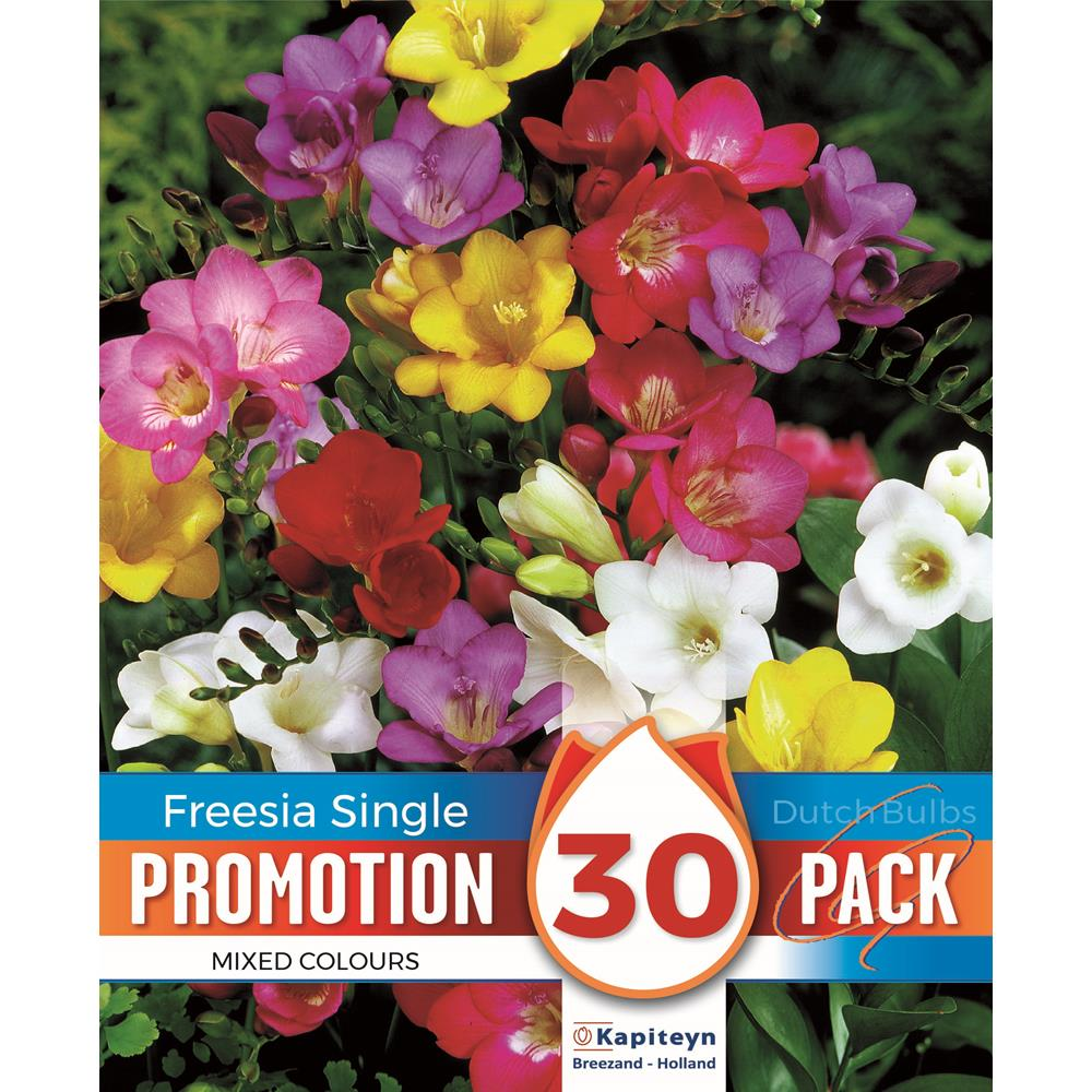 PROMOTION FREESIA MIX
