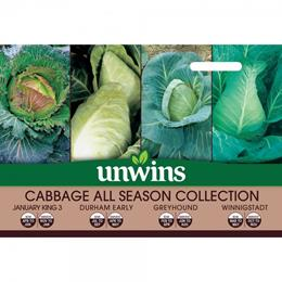 Cabbage All Season Collection Pack