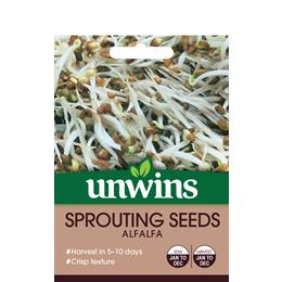 Sprouting Seeds Alfalfa