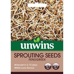 Sprouting Seeds Fenugreek