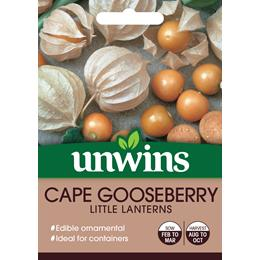 Cape Gooseberry Little Lanterns