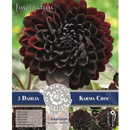 DAHLIA DECORATIVE KARMA CHOC