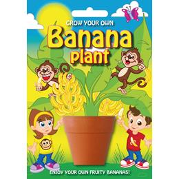 Fun Seeds-Banana Plant