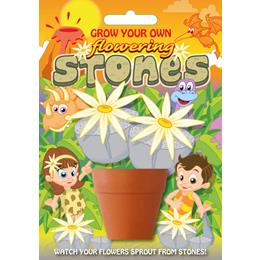 Fun Seeds-Flowering Stones Plant