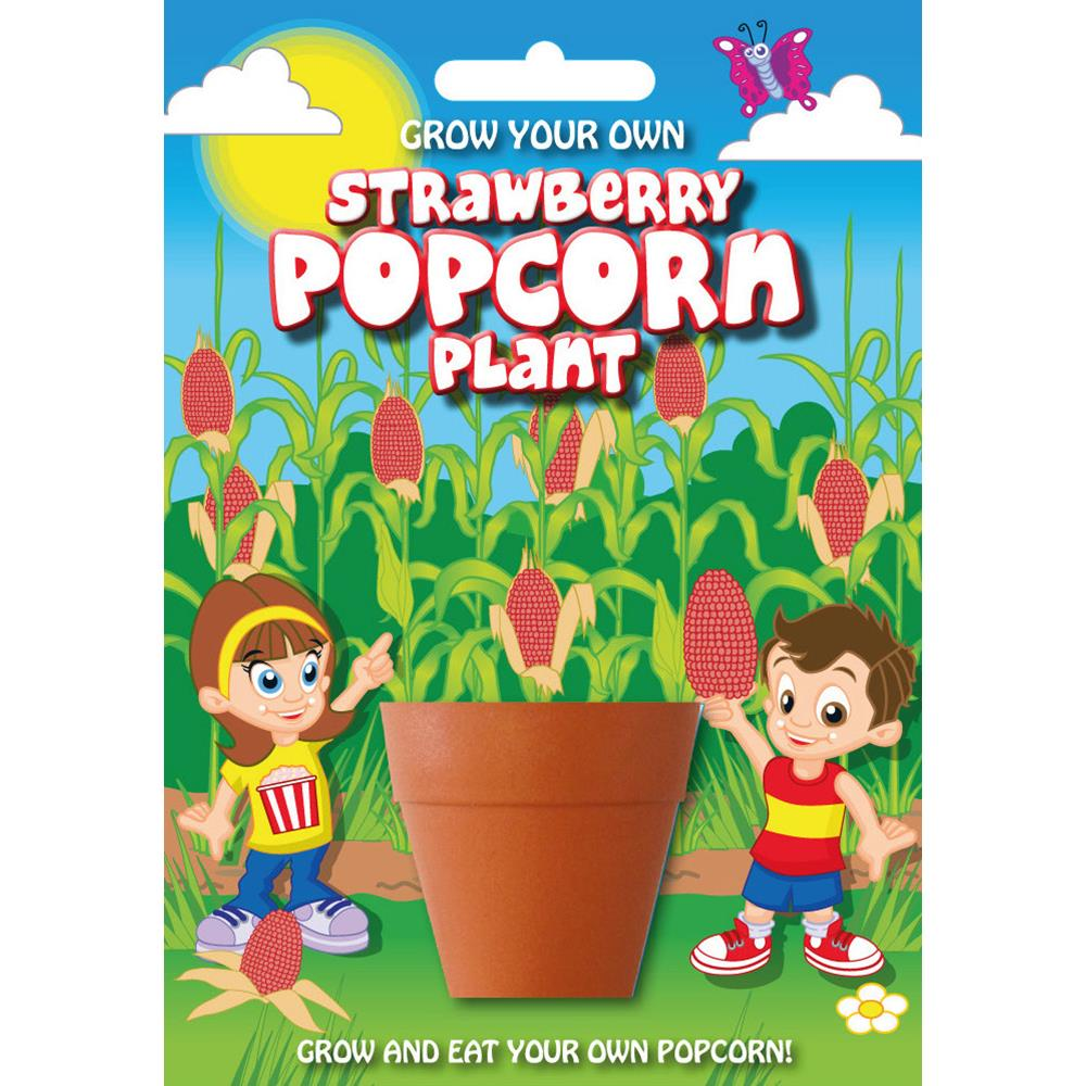 Fun Seeds-Strawberry Popcorn Plant
