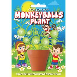 Fun Seeds-Monkey Balls Plant