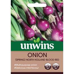 Onion Spring Holland Blood Red