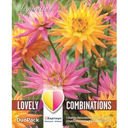 COMBI DAHLIA DECORATIVE KARMA PINK & ORANGE