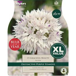 "ALLIUM GRACEFUL BEAUTY - ""BULB OF THE YEAR"""