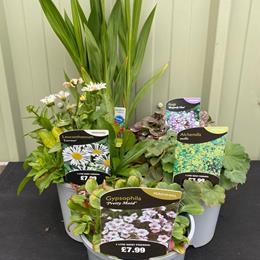 5 Herbaceous Perennials in 2/3l pots Lucky Dip Selection
